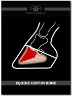 Equine Coffin Bone Cover