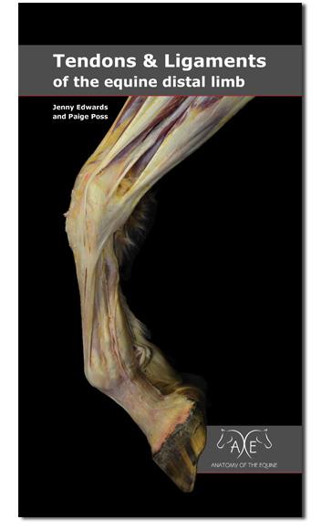Equine Distal Limb